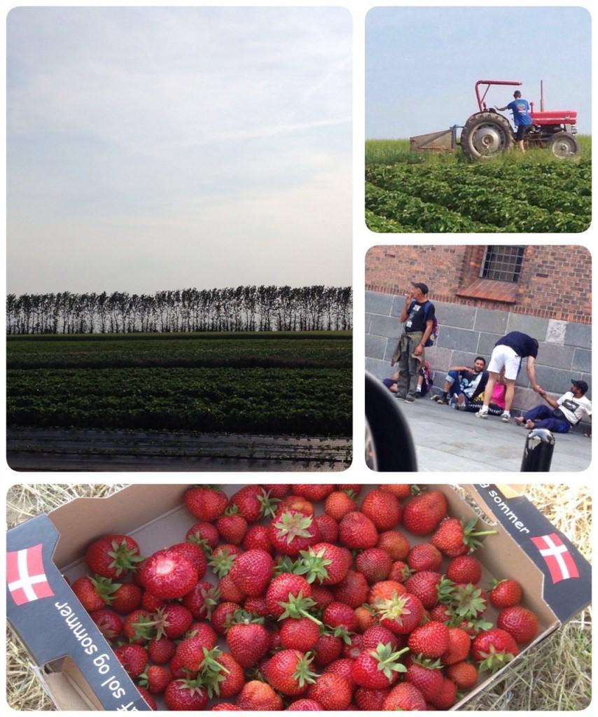Sweet Deed #14 - Plukselv jordbær