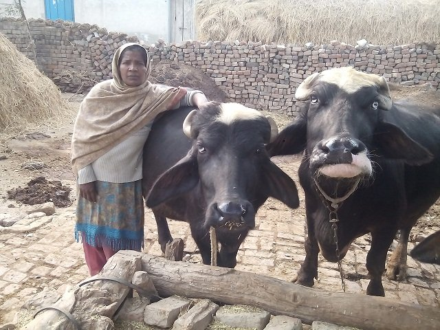 Sweet Deed #34 - Lån til Shaheen fra Pakistan