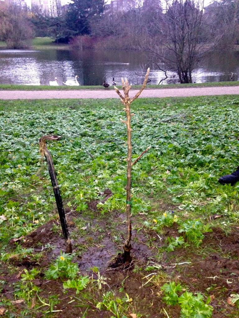 Sweet Deed #49 - Plant et frugttræ